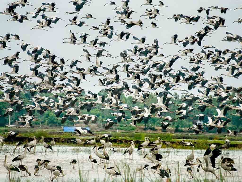 ngoc hien bird sanctuary in ca mau - Southern-most province of Vietnam