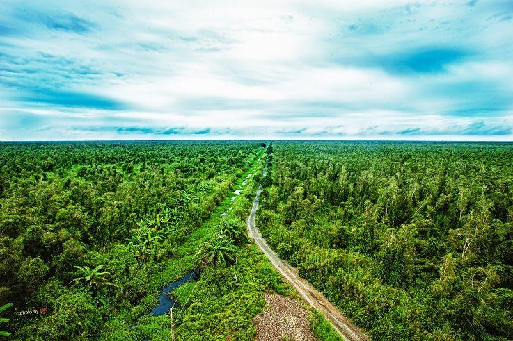 An overview of U Minh Ha National Park