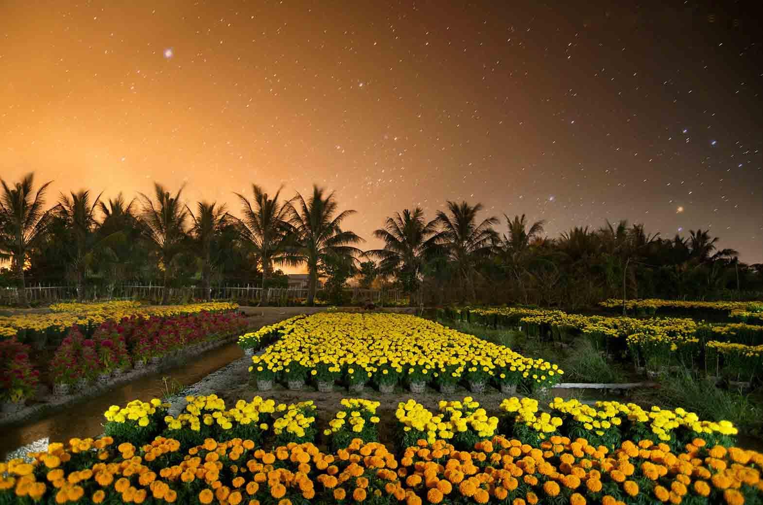 A flower garden in My Tho flower village in the evening 1
