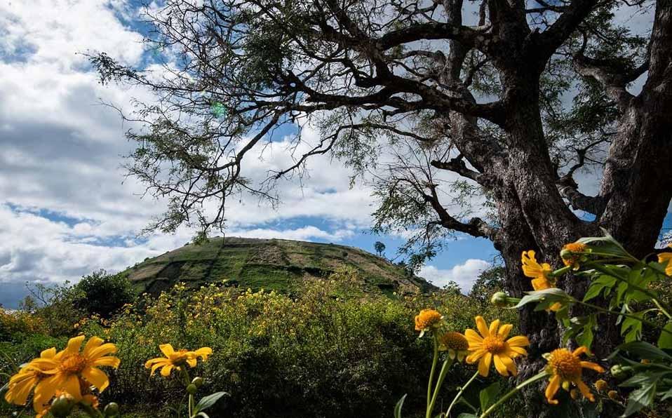 Chu Dang Ya is most beautiful in wild sunflowers blooming season in November